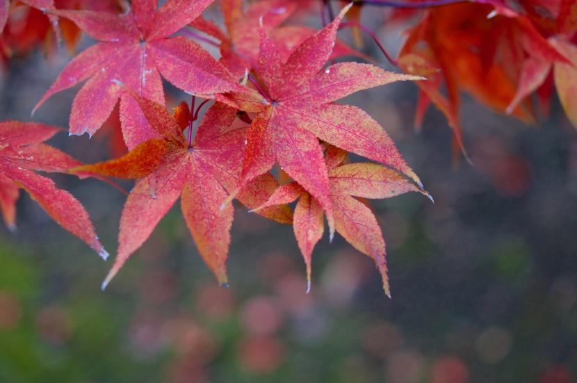 03_Leaves_29